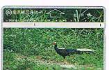TAIWAN - CHUNGHWA TELECOM (L&G) - 1996  D6014 UCCELLI (BIRDS: SILVER PHEASANT)     (CODE 644D)  - USED °  -  RIF. 4758 - Taiwan (Formosa)