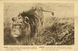 Edition VAN MELLE GAND (sous Réserve) - GENT -  LION - LEEUW                            (1116) - Lions