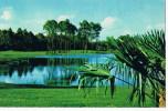 Palm Course  Walt Disney  World Golf Club - Etats-Unis