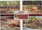 CPSM Lövenpark Graf Westerholt  /  Gelsernkirchen-Buer /  Lion /  Lions Animal Animaux Zoo Parc Animalier //  CP 8/15 - Leoni