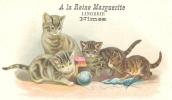 30 // NIMES - A La Reine Marguerite, Lingerie,  Carte Publicitaire  CHATS - Nîmes