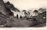 32 - Le Dauphiné - Au Bord Du Glacier De La Meije ( Berger Et Son Troupeau De Chèvre ) - Zonder Classificatie