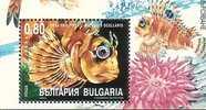 BULGARIA / BULGARIE - 2004 - Ecology - Protection De La Nature - Poissons - 1v.** - Peces
