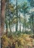 18723 La Bretagne Pittoresque En Foret De Broceliande . EKB 4766A* Yvon - Paimpont
