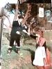 CALABRIA  COSENZA  COSTUMI CALABRESI  N1970 DJ11724 - Costumi