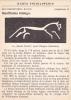 (AKE 59) Esperanto Card White Horse In Berkshire - Blanka Cxevalo En Berkshire - Esperanto