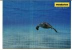 CPM TORTUE MAINE PUB WONDERBRA Maillots De Bains - Schildpadden