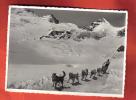 B886 Chiens Polaires Polarhunde Au Jungfraujoch.Visa Censure Militaire 1939.Circulé.Pleyer 8306 - Chiens