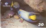 TARJETA DE BRASIL DE LA SERIE ARRECIFES DE CORAL  24-28 (FISH-PEZ) - Peces