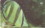 TARJETA DE BRASIL DE UN PEZ   (10-11)  (FISH-PEZ) - Peces