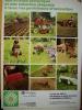 PUB-PUBLICITE- Tracteur - Massey Fergusson - 1970 - - Publicités