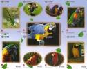 PUZZLE DE 8 TARJETAS DE CHINA DE LOROS (PARROT-GUACAMAYO) - Loros