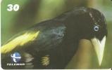 TARJETA DE BRASIL DE UN XEXÉU  (BIRD-PAJARO) - Pájaros