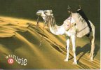 Kameel Camel Chameau Kamele Tunisie - Non Classificati