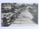 Guerre De 1914 - Infanterie BELGE Dans Les Tranchées. - War 1914-18