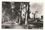 Caussade (82) : La Route De Montauban En 1952. - Caussade