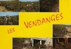 Carte Postale LES VENDANGES De La VIGNE à La CAVE 1974 - Landbouwers
