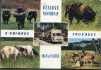 CP-Belgique--Han/Lesse-rés Erve Naturelle D'animaux Sauvages - Belgique