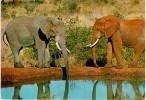 Kenya Elephants Colorful Postcard. Mailed To Israel 198? - Elephants