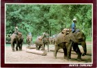 """Thailand / Siam """"Working Elephants, Wood Forests"""" Colorful Postcard. Mailed To Israel 1997 - Elephants"""