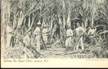 CUTTING THE SUGAR CANE ** Tbe ** Ed J.johnson -  Dos SIMPLE  - - Jamaïque