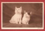 Z066 Aus Der Mappe : Lotte Herrlich, Katzen. Circulé Sous Enveloppe. Série 42 - Cats