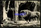 Lion -  Publicité Médicament Transfusine  N° 17 -  Réf :  19384 - Lions