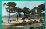 CPSM  VAR (83) LE LAVANDOU- PLAGE DE LA FAVIERE- - Le Lavandou