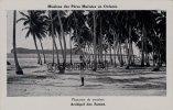 Océanie: Archipel Des Samoa - Plantation De Cocotiers. - (voir Scan Recto-verso). - Samoa