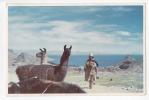 [W834] Bolivia Native American Aborigin In Quechua Or Aymara Chothes Vintage Postcard - Llama Titicaca Lake - Bolivia