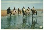 CP CHEVAL CHEVAUX  Promenade Equestre Littoral Mer Plage - Pferde
