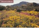 ZS9751 Phoenix Desert Springtime Color Used Perfect Shape - Phoenix