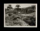 PHOTO - ALGERIE - Scènes Algériennes à BISKRA - Une Boucherie Arabe - Afrique