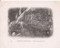 DETROIT DE MAGELLAN 221 BAIE FORTESCUE SOUS BOIS   1903 - Chili