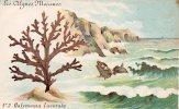 Les Algues Marines - N°2 Halymenia Lacerata - Sin Clasificación