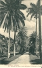 CPA TRINITAD PALM AVENUE - Trinidad