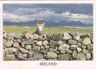 An Irish Donkey, Ireland     IRLANDE - Irlande