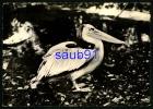 Pélican   -  Publicité Médicament Transfusine   N° 33 -   Oiseaux - Réf : 20118 - Oiseaux