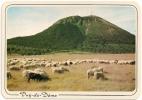 A 6 - Le Puy-de-Dôme - Altitude 1465 M. - Troupeau De Vaches Paissant - Circulée 1983 - Scan Recto-verso - France