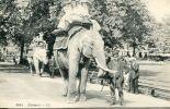 N°15283 - Cpa éléphants - Éléphants