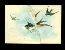 Chromo ( 2355 )  Carte Mignonette Dentelée Gaufrée Reliëf à Système Uittrekbaar Vogel Oiseau Uccello - Non Classés