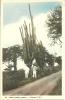 CURACAO   D.W.I.   Cactus (cereus Griseus)   Animée - Curaçao