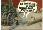 CPSM Tortue Escargot Animaux Humoristiques Les Limitations De Vitesse ? Vous Rigolez - Schildpadden