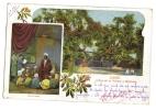 Caire Egypte Arbre De La Vierge - Egypte