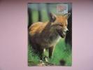 CARTE MAXIMUM MAXIMUM CARD RENARD - Stamps