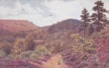 HINDHEAD - A BYE PATH.  A.R. QUINTON - Surrey