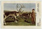 Victoria (1937) - 504 - Sweden, Sverige, Lapland, Lappland, Sápmi, Sameland , Renen, Reindeer - Victoria
