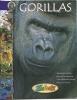 Gorillas, Wildlife / Gorilles, Livre Educatif, Photos, Dessins / Zoo Book - Livres, BD, Revues