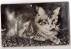 Carte Postale Musicale,Allain,Chat , - Cats