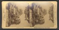 België / Belgique - Brussel / Bruxelles ± 1890 - 1905, Catacomben, Kerkhof Te Lacken - Stereoscoop